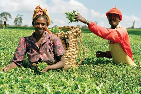 The New Wealth Generators in Africa