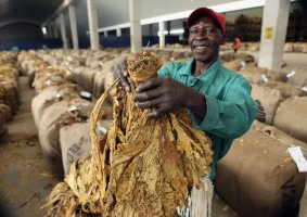 ZIMCODD Calls Tobacco Farmers Demand To Be Paid in Foreign Currency Justified