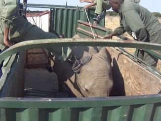 Lawyer Petition Zimbabwe Parliament on Wildlife Trade