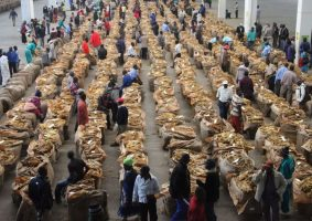 Tobacco Farmers to Get 50% of Sales in Foreign Currency