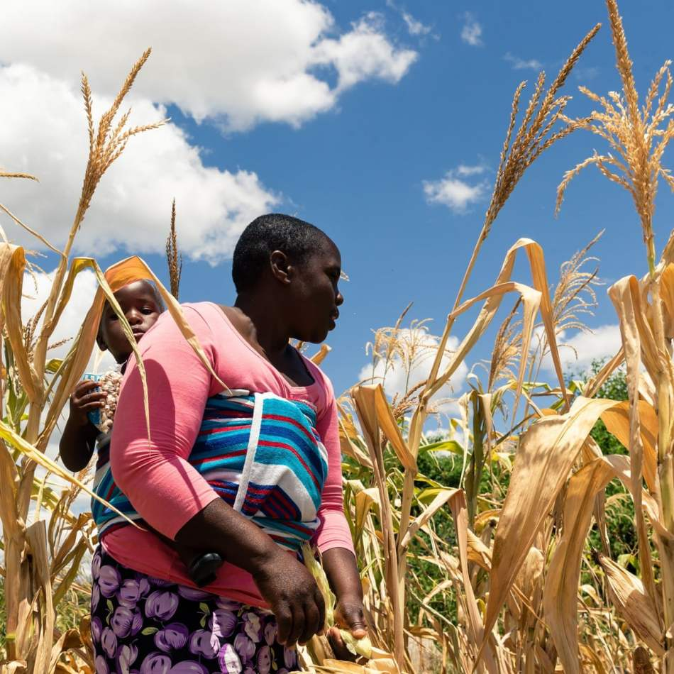 Zimbabwe Faces Hunger; Partners Chip In