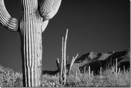 saguaro_national_park