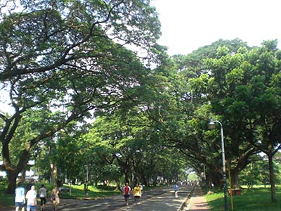 It is always pleasant to run within UP Diliman