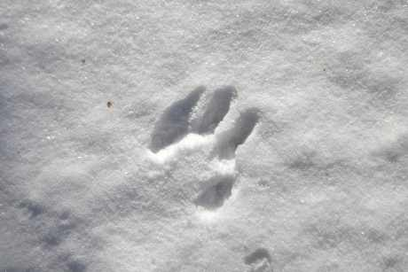 Nature Buddies: Animal Tracks | BHWP.org