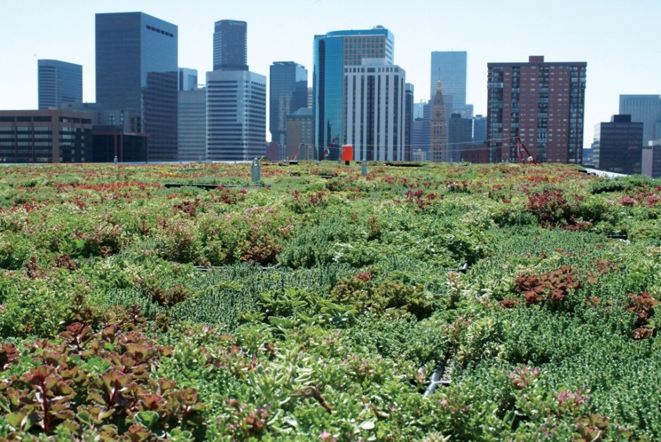 Gary+Grant+-+greenroof_rooftop (1)