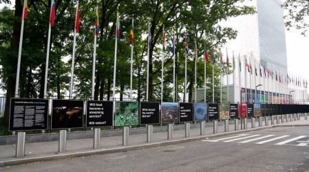 Countryside at the United Nations, Fotoğraf: Noam Ekhaus/OMA'nın izni ile