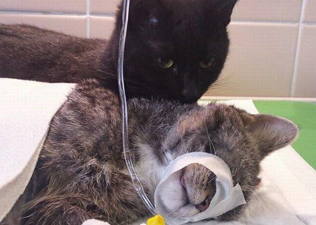Kot Rademenes ze schroniska w Bydgoszczy