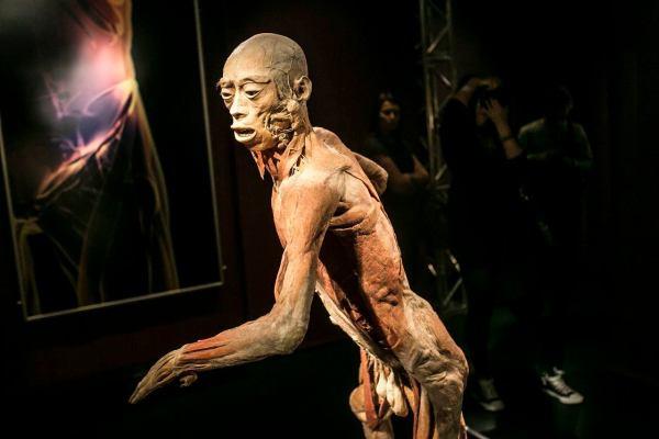 Human Body Exhibition Przestpstwo Sprawa Prokuraturze