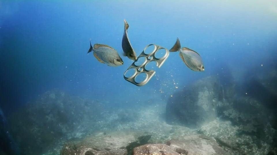 Znalezione obrazy dla zapytania zwierzęta plastik morze