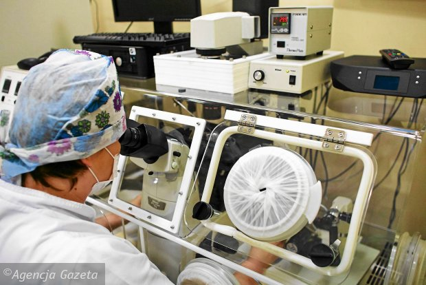 In vitro. Embriolog przy pracy