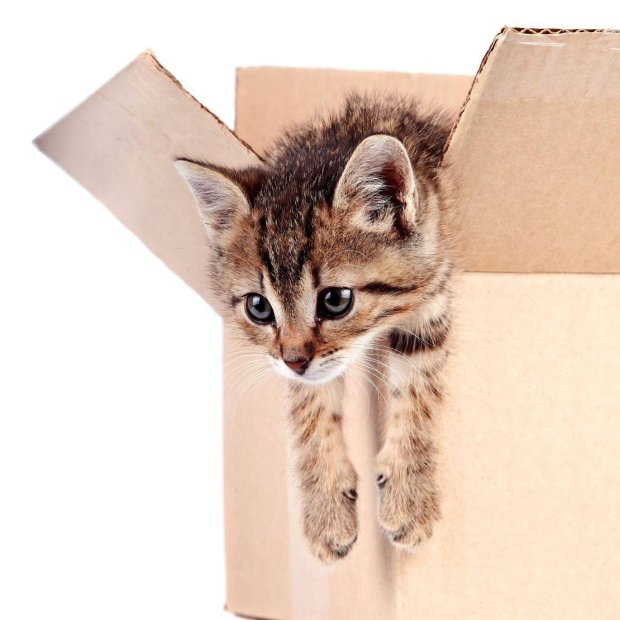 Domowe koty czują się komfortowo w temperaturze 30-36 st. Celsjusza