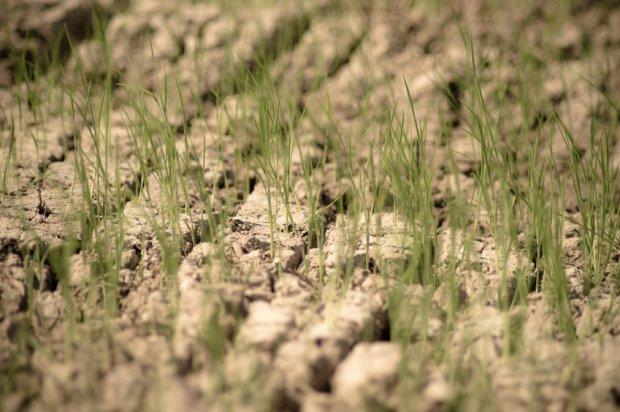 Ocieplenie klimatu zwiększa ryzyko susz, upałów i powodzi.