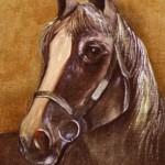 cavalo_display