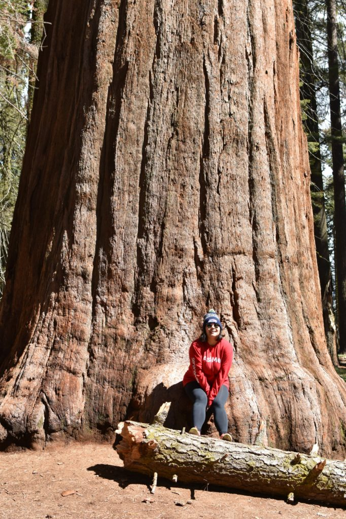 A Low Maintenance Glampers Guide to Sequoia National Park