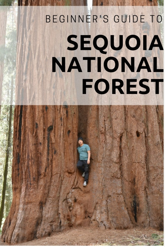 guide sequoia national park