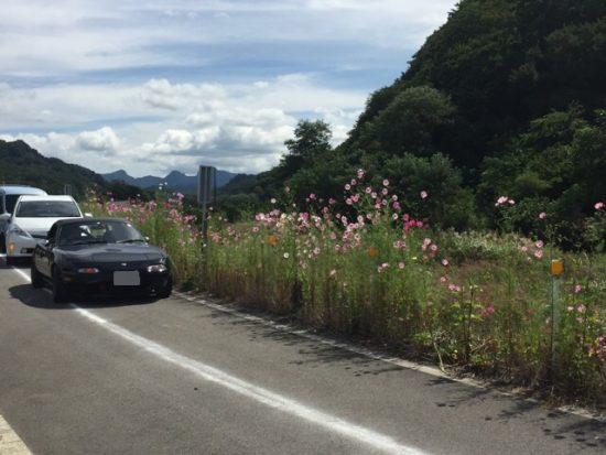 佐久コスモス街道コスモスまつり駐車場画像