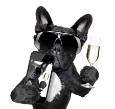 Bulldog - wine, dog, mobile, calice, vino, smartphone