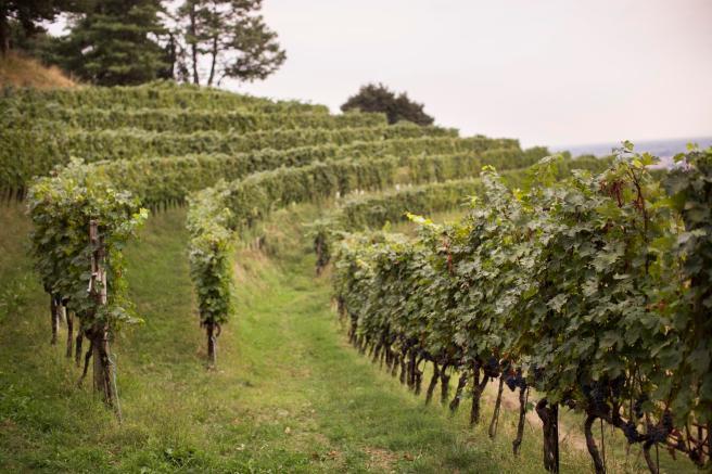 diesel-farm-filari-vino