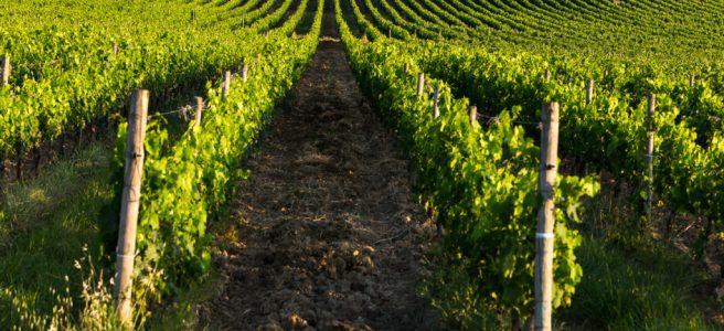 Montalcino: arte e vino