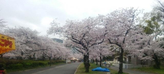 桜並木の公園