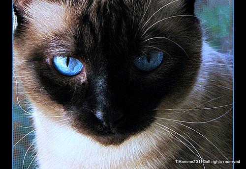 目に青い光はダメなんです。