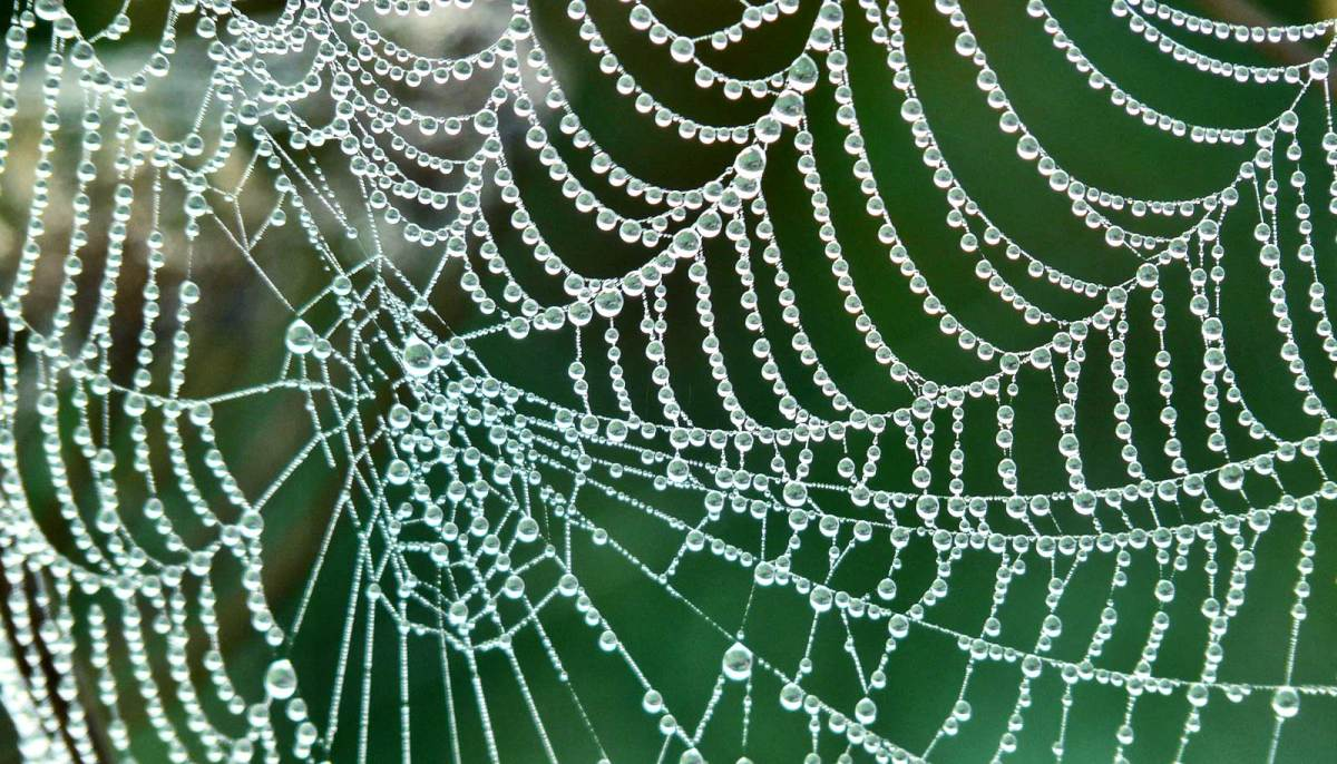 spider web with rain drops