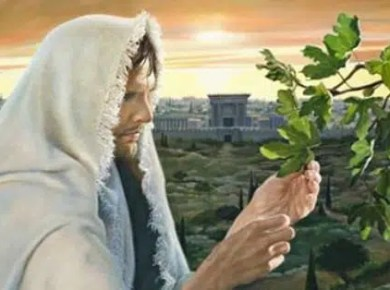 Why did Jesus curse the Fig tree