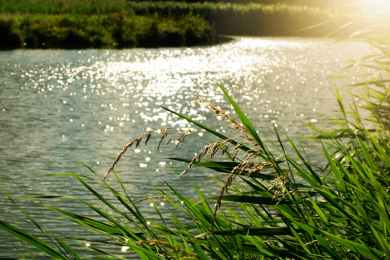 River, baptized twice