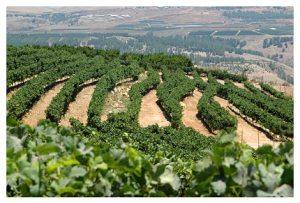 vineyard-hefer-valley