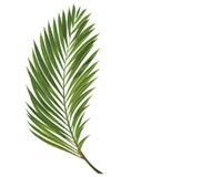Resurrection Egg Palm Branch