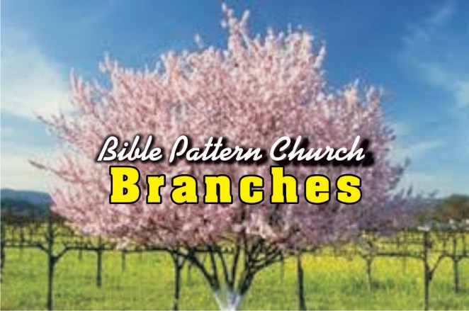 Our-Branches