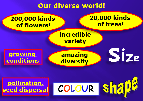 OUR DIVERSE WORLD