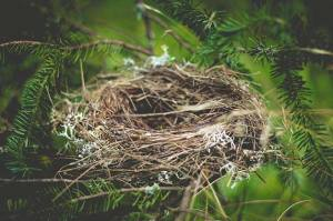 Evidence of Design in The Creation: The birds make their nests
