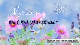 Stop & Think Meditations: How is your garden growing?