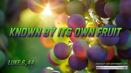 """Daily Readings & Thought for September 14th. """"…. KNOWN BY ITS OWN FRUIT"""""""