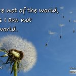 "Daily Readings & Thought for October 22nd ""… THEY ARE NOT OF THE WORLD"""