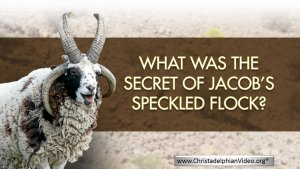 What was the secret of Jacob's Speckled Flock