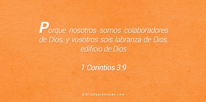 1 corintios 3:9