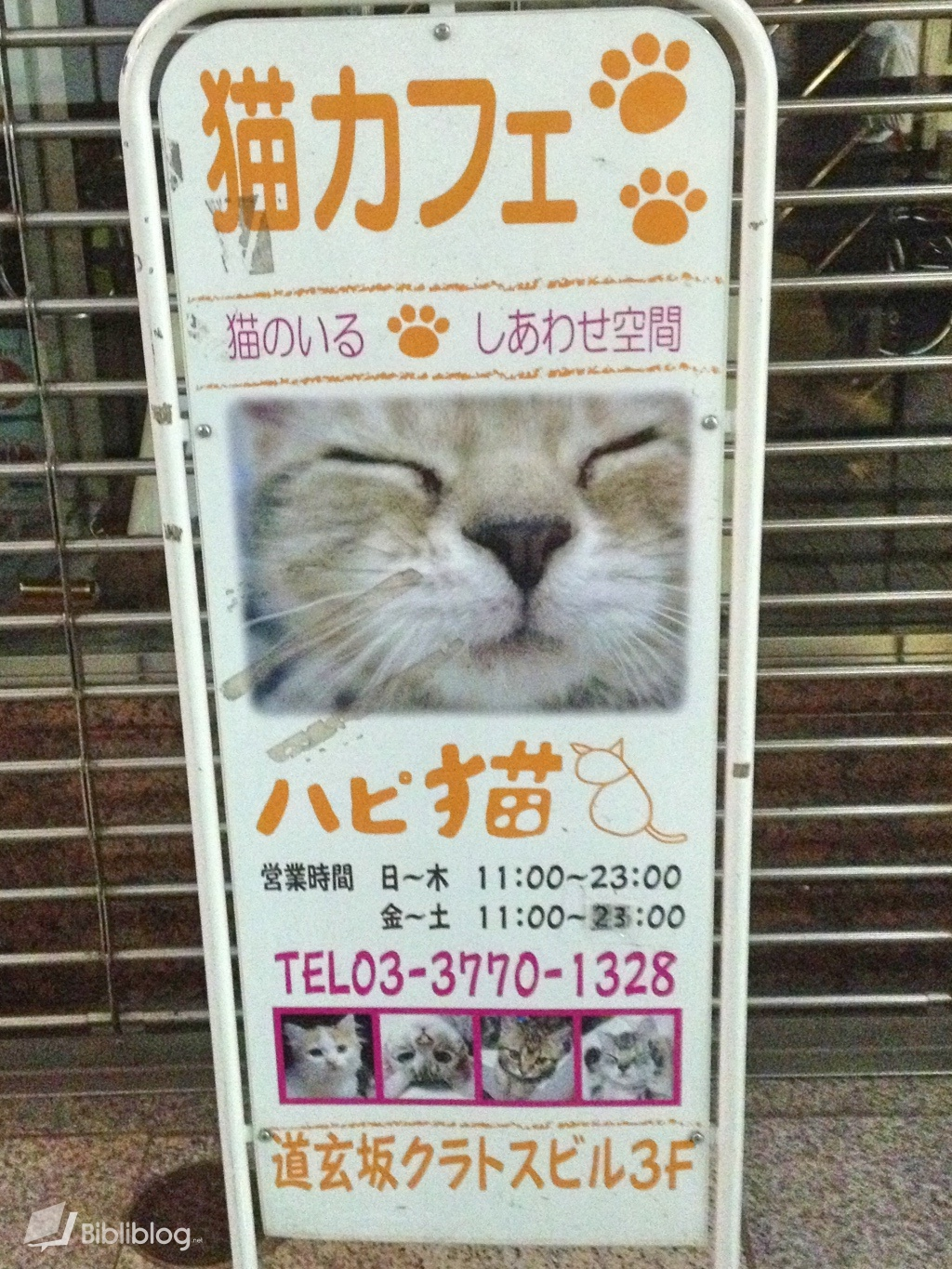 neko-bar Bar à chats au Japon