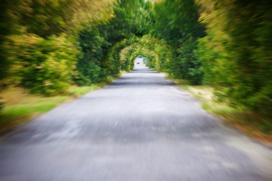 Tunnel vision:Road in motion speed on the asphalt forest road blur background.