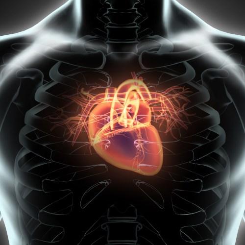 3D Illustration Of Human Internal Organic - Human Heart.