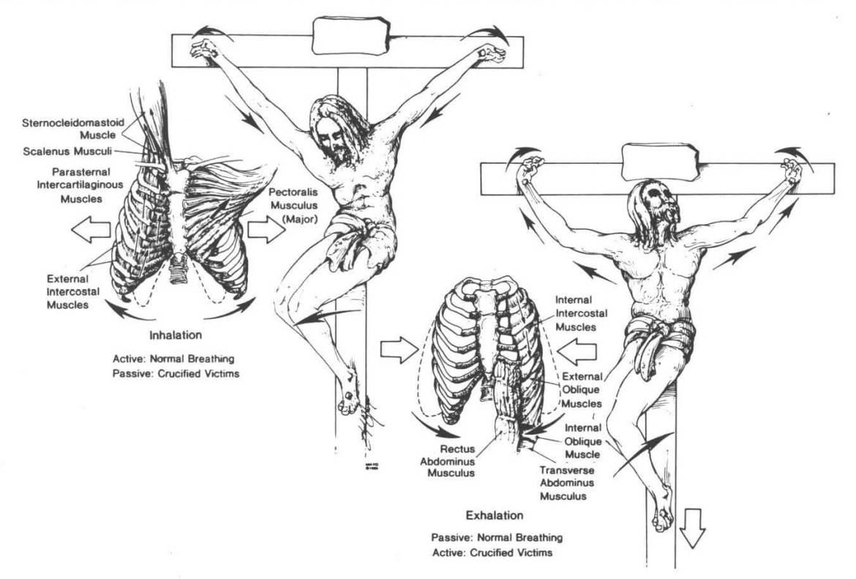 raspeće Isus anatomija