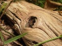 un œil reptilien qui vous fixe