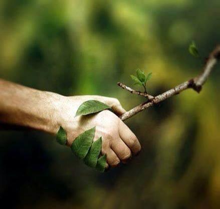 :: Inteligencia en el mundo vegetal ::