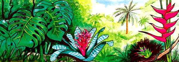 En esta imagen vemos una parte de una selva. Mucha vegetación y flores exóticas.