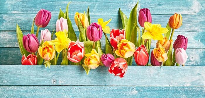 Tulpen Katalog
