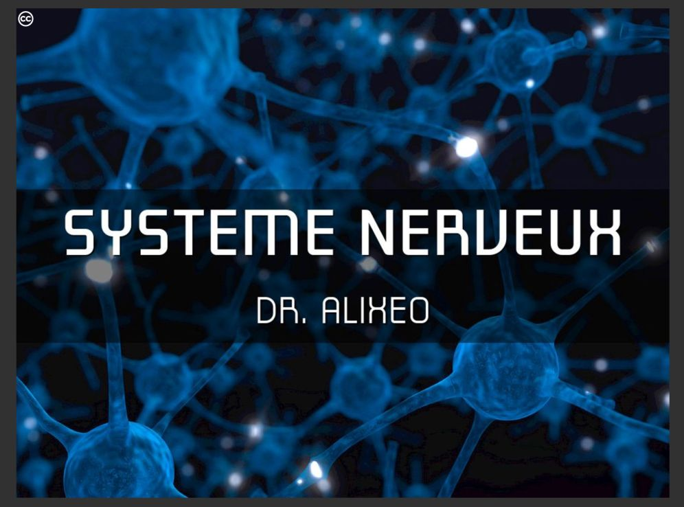 systeme-nerveux
