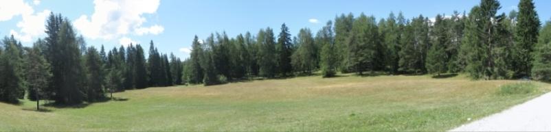 Lo spettacolare manto verde dei 7 Larici durante una giornata estiva (visitvaldinon.it)
