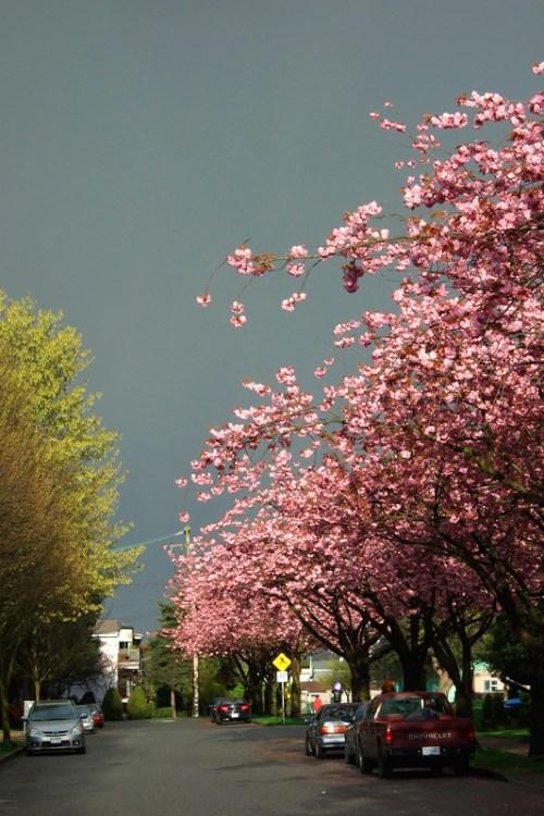 grey_sky_pink_flowers-734184
