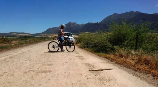 Jacques contemplating if he should grab the braai tongs and remove the puffadder from the road.